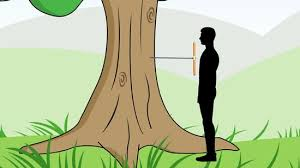 Judge A Tree By Its Fruit - 2 easy ways to determine the age of a tree wikihow
