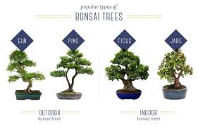 bonsai tree care for beginners ftd com