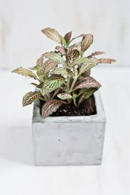 beautiful unique indoor plants 68 cool house plants to grow unique