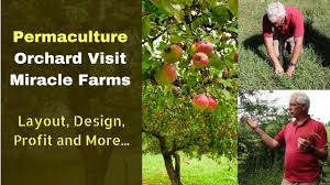 how to start a permaculture orchard organic miracle farms