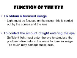 Anatomy Of Human Eye Ppt Anatomy Of The Eye Ppt Video Online Download