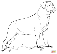 rottweiler coloring page free printable coloring pages