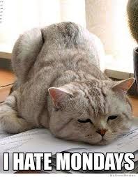 Monday Cat Meme - i hate mondays weknowmemes