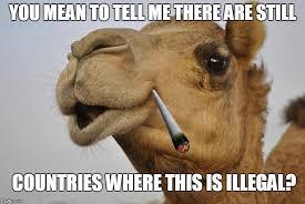 Camel Memes - truth camel memes imgflip