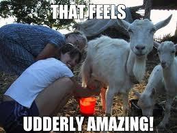 Animal Pun Meme - funny pun memes 28 images little thor pun funny puns puns