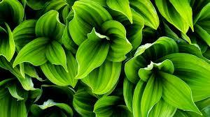green plant leaves full hd bakgrund and bakgrund 1920x1080 id