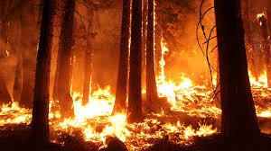 California Wildfires Colorado by News Nasa Forest Service Maps Aid Fire Recovery
