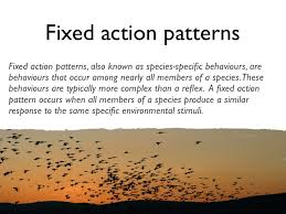 What Is A Reflex Action Example Lesson 1 Behaviours Not Dependent On Learning