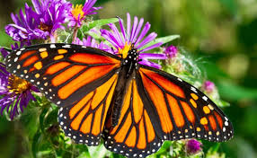 10 cool facts about butterflies ecowatch