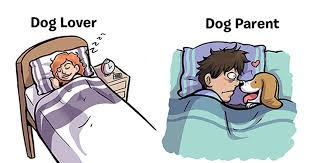 Dog Lover Meme - 7 differences that tell if you are a dog lover or a dog parents