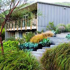 lush landscaping for a mid century modern home sunset