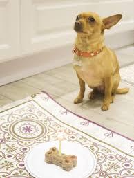 best 25 no grain dog food ideas on pinterest grain free puppy