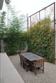 Privacy Trellis Ideas by 24 Best Landscaping Images On Pinterest Gardens Flowering Vines