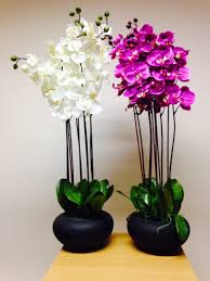 plant 84cm extra large pink orchid in pot house office indoor plants