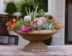 inspiring ideas for arranging succulents video garden lovers club