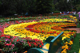 ooty flower show 2015 photos gallery