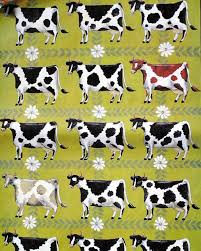 cow wrapping paper 102 best cows a bunga images on cow posters and tags