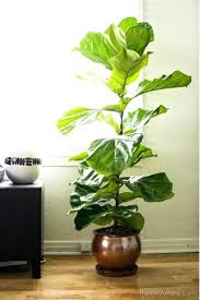 house plants low light how to grow houseplants in low light conditions todays homeowner how