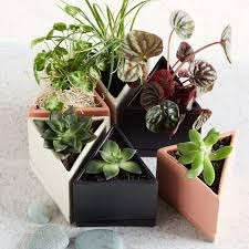 best cactus accessories and tools to keep plant alive 2017