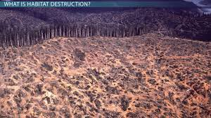 what is habitat destruction effects definition u0026 causes