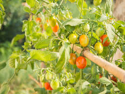 vegetable gardening 101 grow your own food like a boss