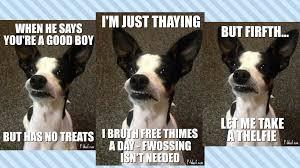 Boston Terrier Meme - dog memes positively woof