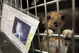 California Wildfire Animal Rescue by California Pet Stores Can Only Sell Rescues Simplemost
