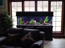 designer aquarium kissyourfish lehigh valley aquarium fish tank maintenance
