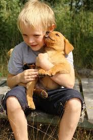 Gambar anak anjing binatang menyusui interaksi anjing seperti