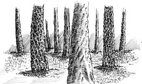 how to draw tree trunks with pen and ink my pen and ink drawings