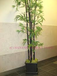 bamboo plant pot 85 enchanting ideas with bamboo plant pot