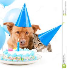 gateau anniversaire animaux chaton de gâteau d u0027anniversaire photographie stock image 8707382