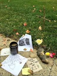 Dead Squirrel Meme - maggie howell on twitter someone made a memorial for a dead