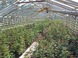 Inside Greenhouse Ideas 100 Inside Greenhouse Ideas 5 Northern Greenhouse Examples