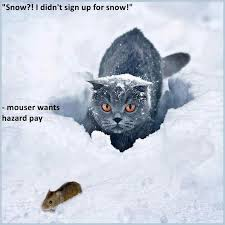 Snow Memes - lolcats snow lol at funny cat memes funny cat pictures with