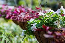 flowers garden city garden city nursery plants flowers u0026 trees in bentonville ar