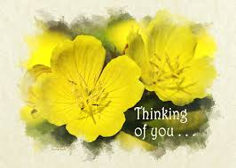 thinking of you flowers thinking of you primrose flowers greeting card photograph by