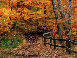 desktop backgrounds fall collection 78
