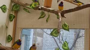 heat l for bird aviary paul bancroft author at planet aviary