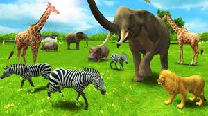 baby learn about animals have fun with real animal fun