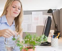What Plants Are Cubicle Friendly by How Can I Create Good Feng Shui In My Office Cubicle