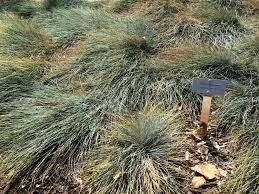 native plants of idaho california native shade garden formla landscaping