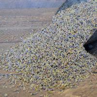 moss ribbon dried moss ribbon moss roll