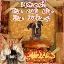 did the cat eat the turkey free turkey ecards happy