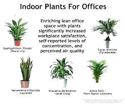 best plant for office feng shui office plants best office plants plants for office low