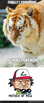 Funny Tiger Memes - tiger memes best collection of funny tiger pictures