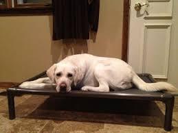 5 best indestructible dog bed dog guide 4u