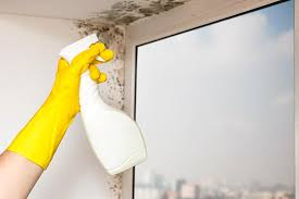 mold removal from the bathroom