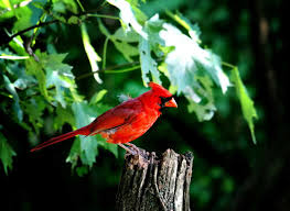 birds in the garden creating a haven for colorful birds in your