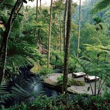 Honeymoon Cottages Ubud by Best 25 Hotels In Ubud Ideas On Pinterest Bali Indonesia